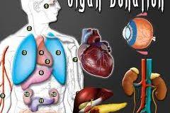 slika organa za doniranje